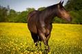 Картинка лето, природа, конь