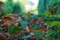 Картинка листочки, зелень, блики, земля, макро, размытость