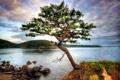Картинка лес, берег, вода, озеро, камни, дерево
