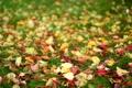 Картинка осень, трава, листья, размытость