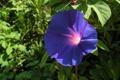 Картинка растение, цветок, макро, листок