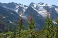 Картинка снег, цветы, горы, природа, настроение, вершины, красота