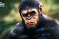 Картинка обезьяна, примат, caesar, Планета обезьян: Революция, Dawn of the Planet of the Apes