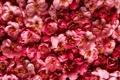 Картинка цветы, желтые, розовые