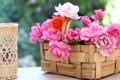 Картинка розы, лепестки, корзинка, © Elena Di Guardo