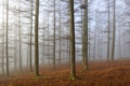 Картинка лес, деревья, пейзаж, туман