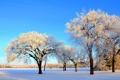 Картинка зима, небо, снег, деревья, парк