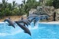 Картинка полет, пальмы, прыжок, бассейн, дельфины, океанариум