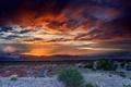 Картинка небо, дерево, краски, пустыня, долина, кусты, сухое