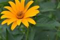 Картинка цветок, лето, лилия, зеленое, оранжевое