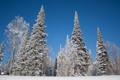 Картинка зима, снег, деревья, пейзаж, ели