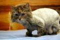 Картинка кровать, модница, кошка