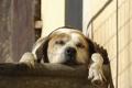 Картинка отдых, сон, лапы, спящая