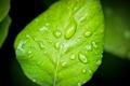 Картинка вода, капли, макро, зеленый, листок