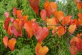 Картинка листья, осень, ветка, макро