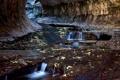 Картинка листья, ручей, скалы, тоннель, Zion National Park, сша, юта