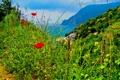 Картинка трава, пейзаж, цветы, природа, Италия, Cinque Terre
