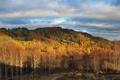 Картинка осень, лес, деревья, холм