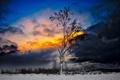 Картинка зима, небо, снег, тучи, дерево, зарево