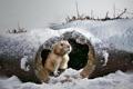 Картинка зима, природа, зверёк