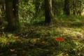 Картинка лес, трава, деревья, природа, фото, гриб