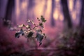 Картинка листья, природа, ветка