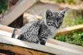Картинка кошка, лето, кот, солнце, тигр, зеленый, день