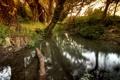 Картинка деревья, природа, ручей, весна