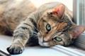 Картинка кошка, глаза, кот, лапа, окно, зеленые, подоконник