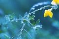 Картинка цветок, роса, растение