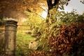 Картинка осень, природа, после дождя