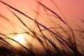 Картинка небо, трава, цвета, солнце, макро, закат, растения