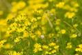 Картинка поле, лето, свет, цветы, природа