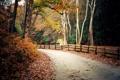 Картинка дорога, осень, лес, листья, деревья, природа, дом