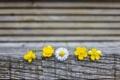 Картинка цветы, желтый, фон, дерево, обои, настроения, ромашка