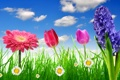 Картинка небо, трава, цветы, ромашки, весна, colorful, луг