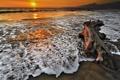 Картинка песок, море, пена, закат, бревно
