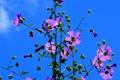 Картинка небо, цветы, растение