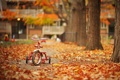 Картинка листья, деревья, велосипед, парк, Осень