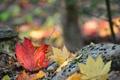 Картинка осень, лес, листья, камни