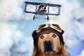 Картинка собака, очки, самолёт