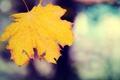 Картинка осенний, кленовый, лист, макро