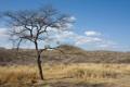 Картинка саванна, Намибия, трапеза, поедание добычи на дереве, окрестности Виндхука (Windhoek), Düsternbrook Guest Farm, Африканский леопард ...