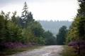 Картинка дорога, природа, дождь, обои, wallpapers