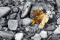 Картинка осень, вода, природа, лист, камни