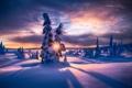 Картинка зима, лес, снег, природа, рассвет