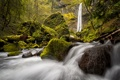 Картинка лес, камни, водопад, мох, Oregon, Columbia River Gorge, Elowah Falls