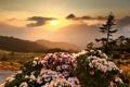 Картинка небо, пейзаж, закат, цветы, горы