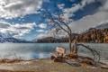 Картинка природа, озеро, скамья