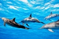 Картинка группа, вода, дельфины, море
